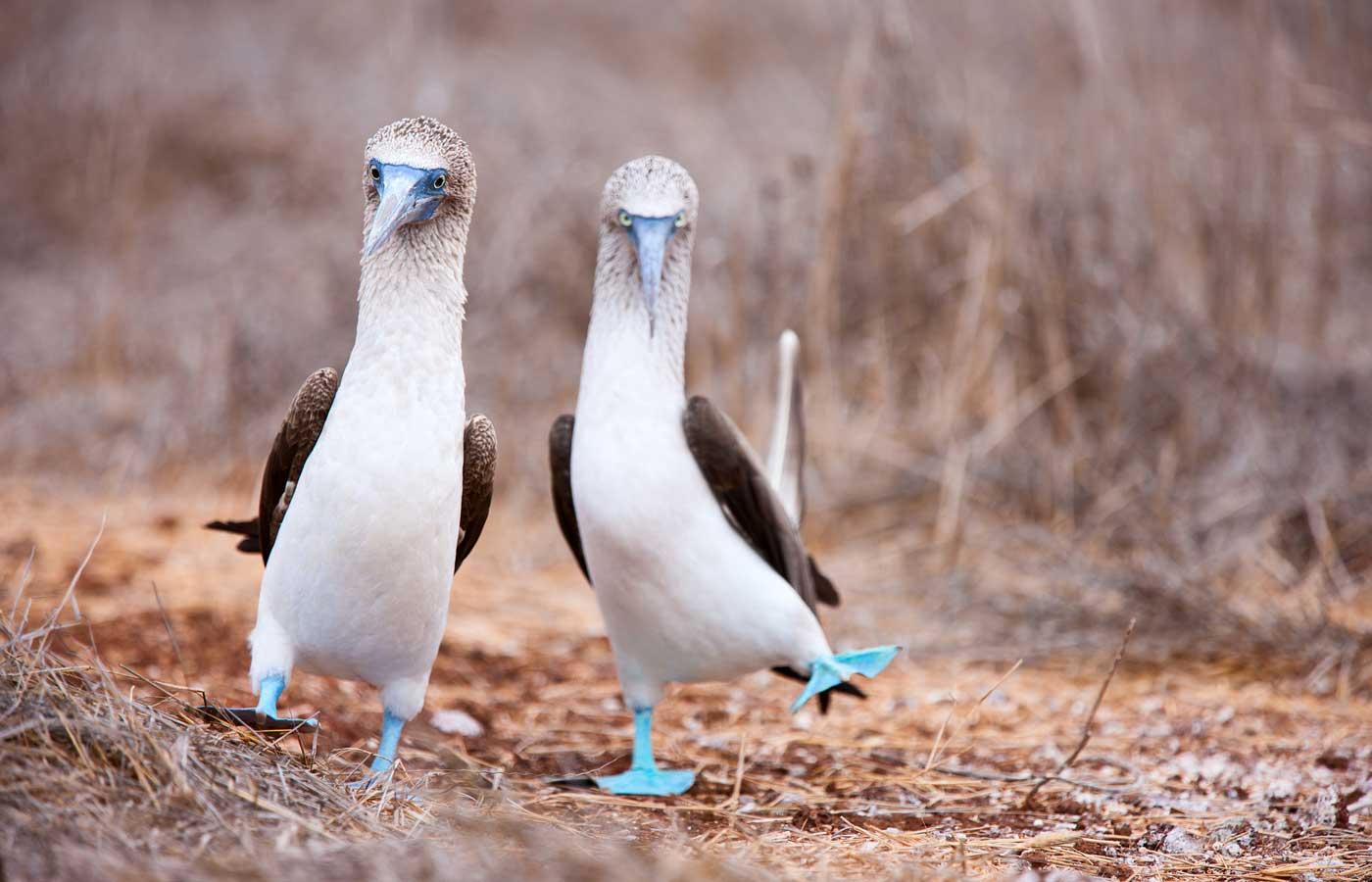 Luxury Galapagos holidays