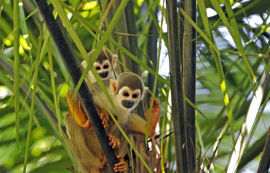Monkeys in the Amazon Rainforest