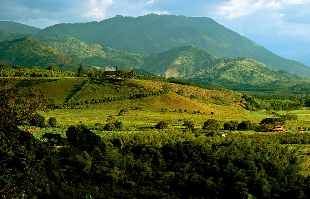 Hacienda Bambusa Coffee Region Columbia