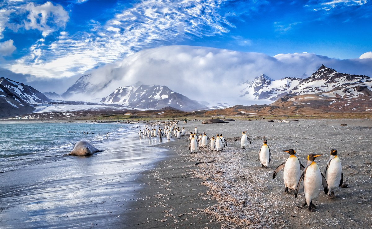 South Georgia Island, Antarctica luxury cruises