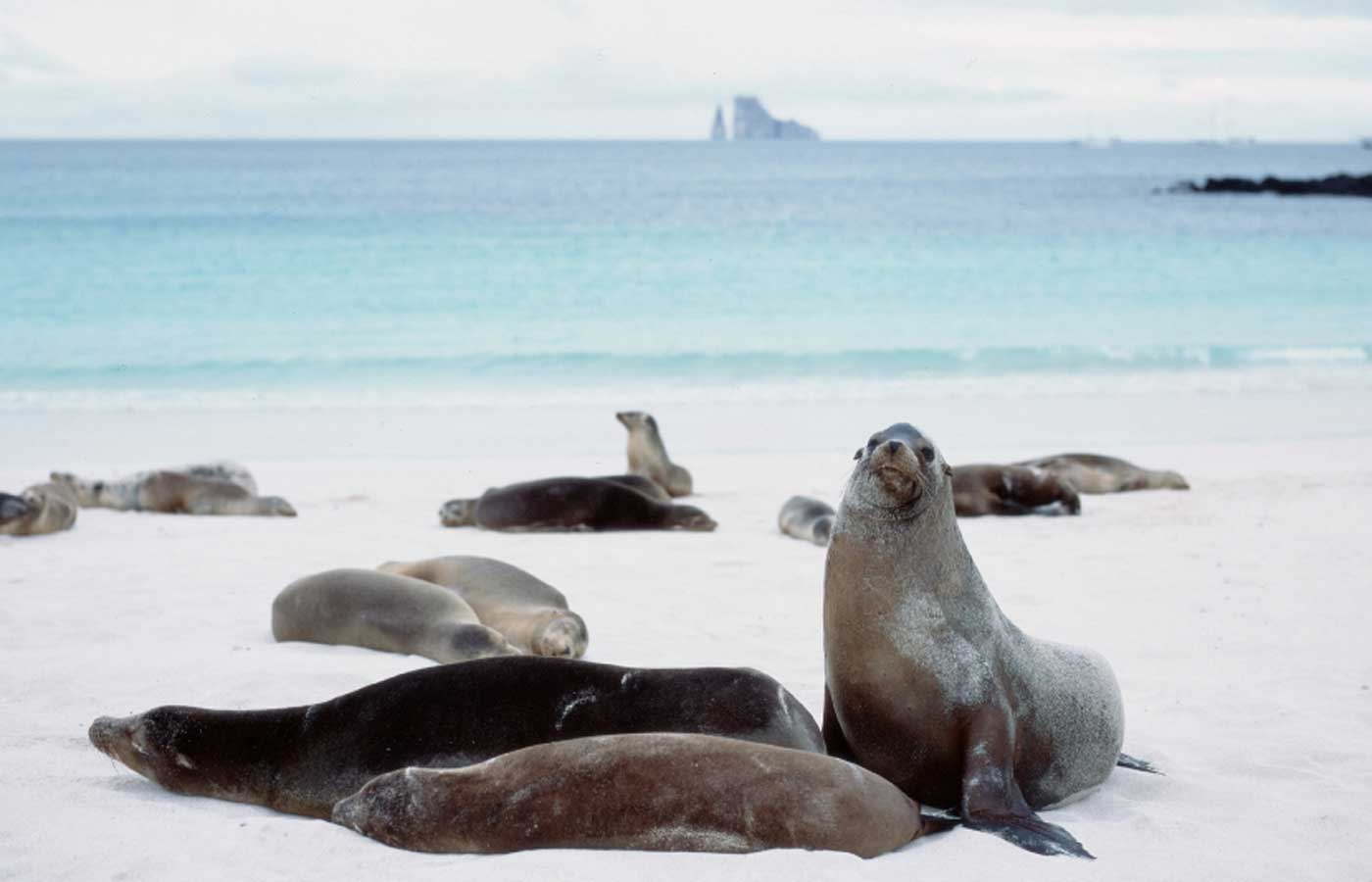 Sea lion group, Galapagos Islands