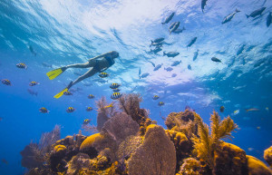 Snorkelling Belize, luxury Belize, luxury holidays to Belize, Belize luxury holidays, tailor-made holidays to Belize