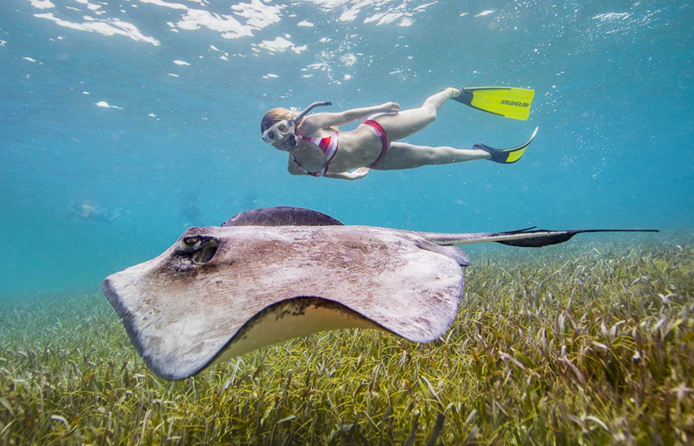 Belize snorkelling with Sting Ray, luxury Belize, tailor-made holidays to Belize, luxury holidays to Belize, Belize luxury holidays