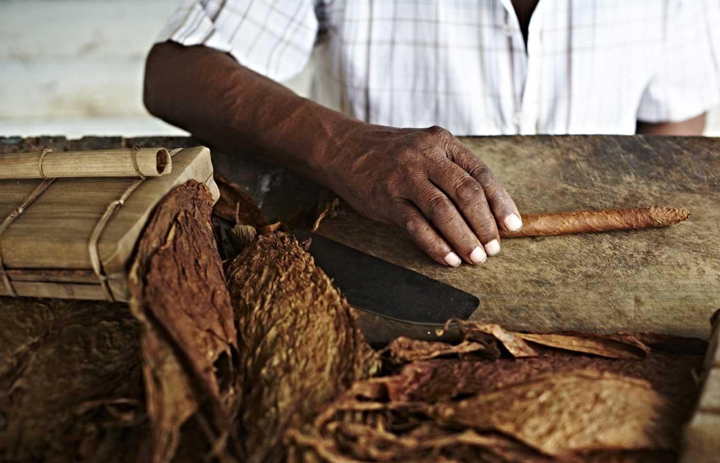 Cuban Cigar, Vinales, Cuba