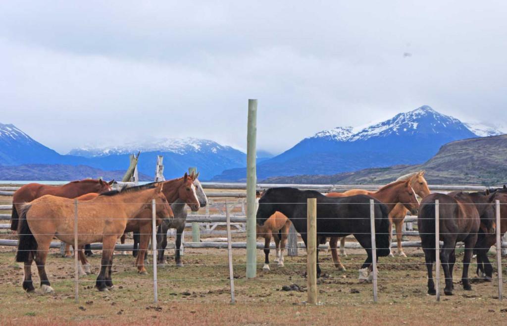Horses at Estancia Cristina, Patagonia, Argentina