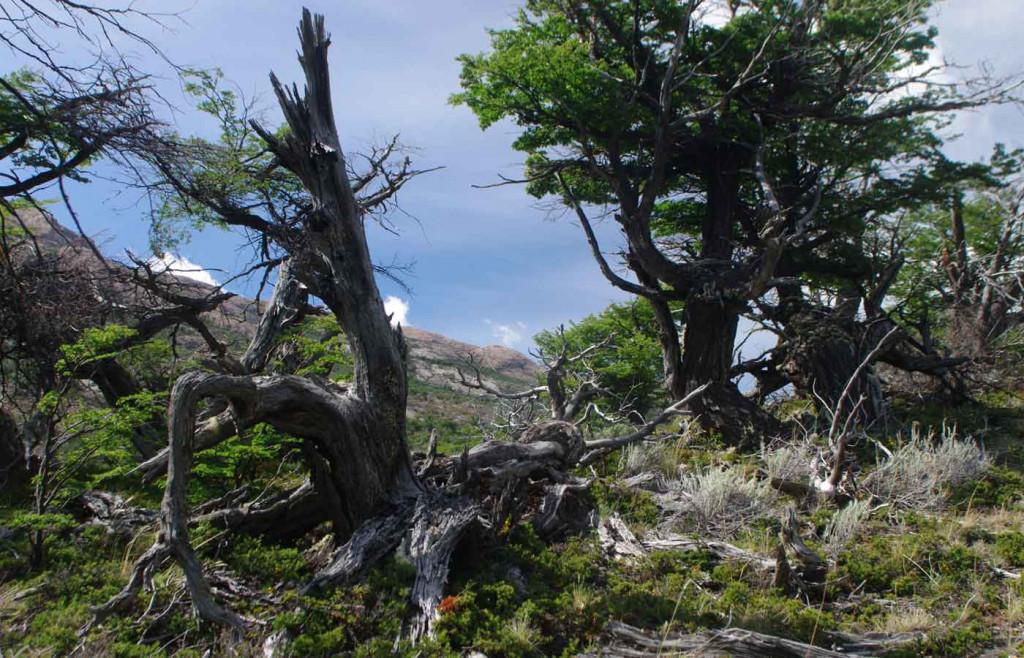 Lake view nearby Estancia Cristina, Patagonia, Argentina