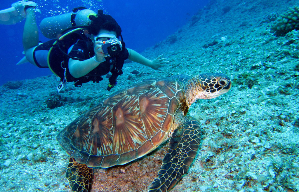 Diving with sea turtles in Costa Rica