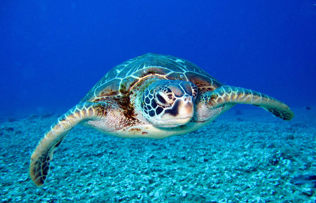 How-To Guide: Sea-Turtle Spotting in Costa Rica - Humboldt Travel