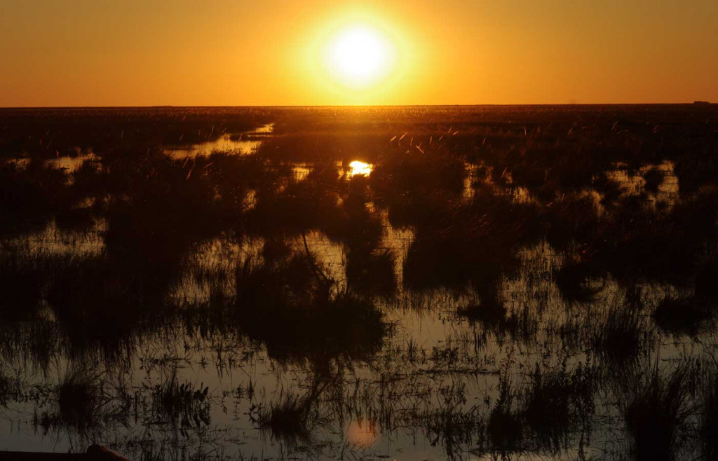 A stunning sunset in the Ibera Wetlands
