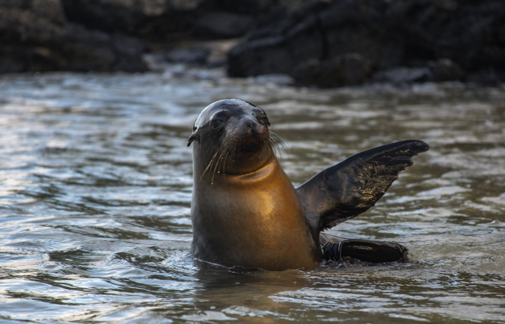 Sealions in the Galapagos Islands