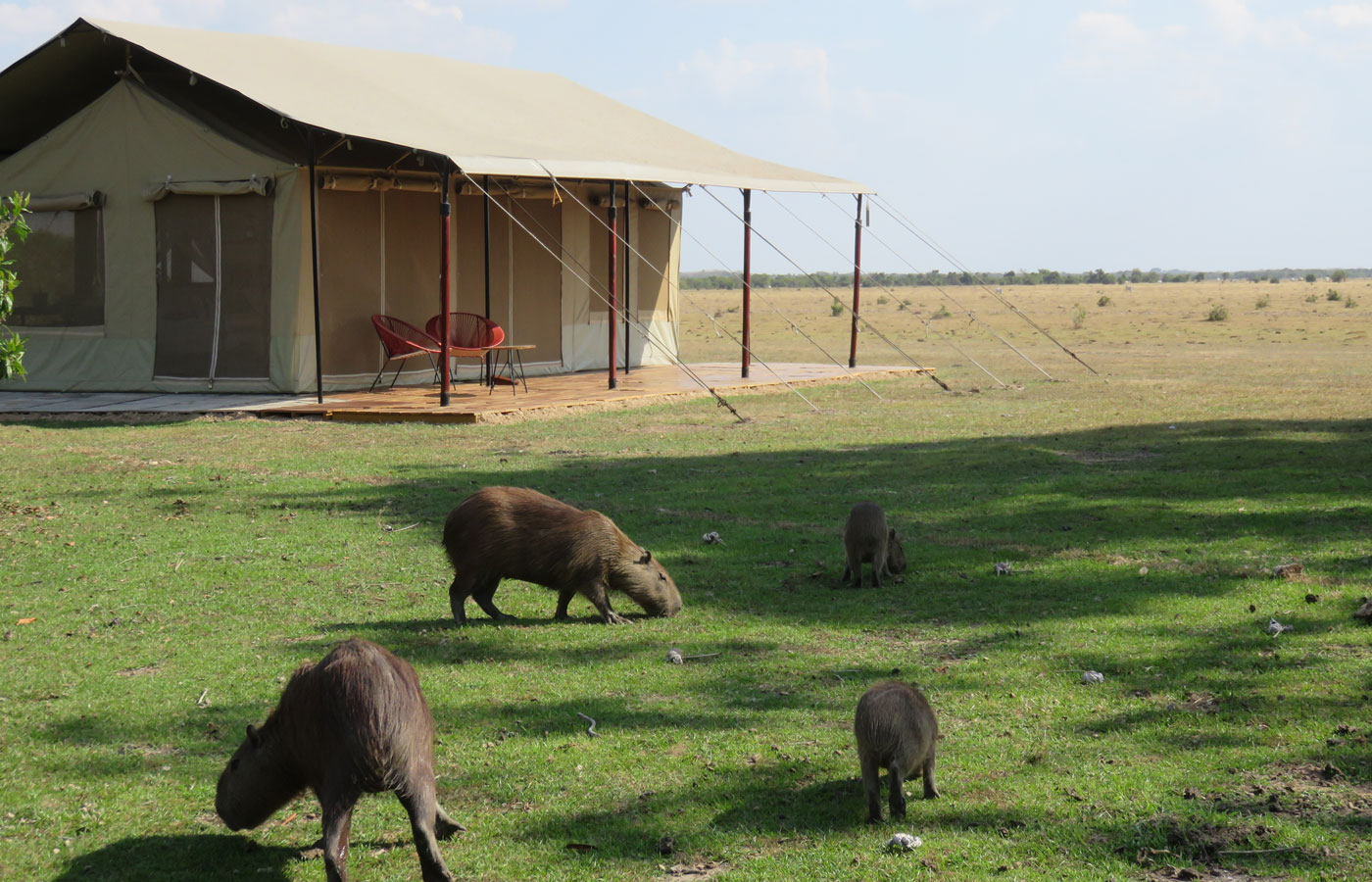 Wildlife at Corocora Camp - Los Llanos