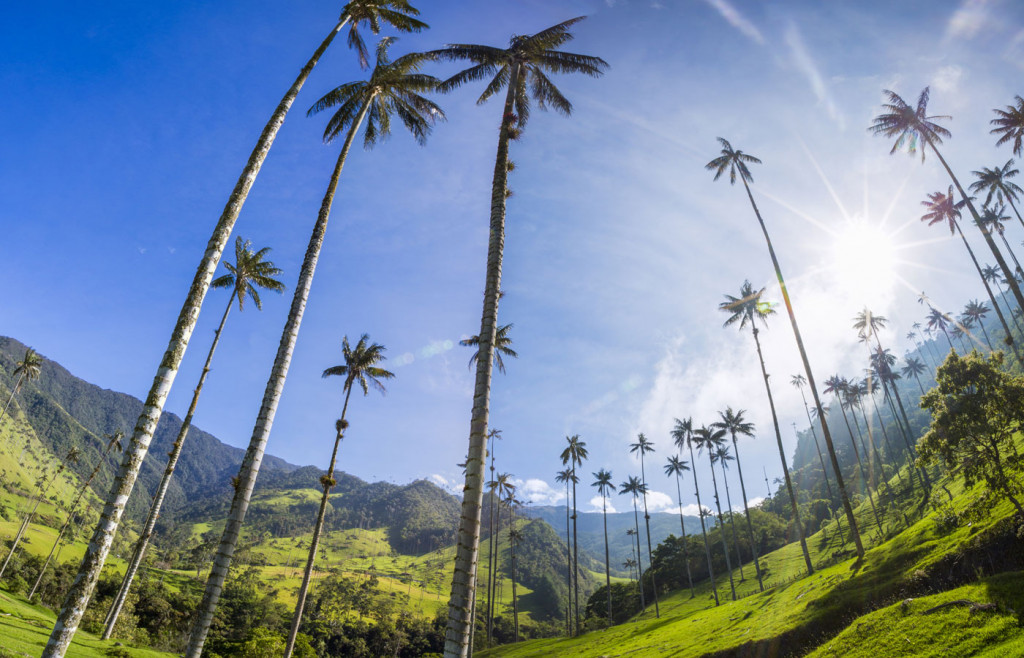 The Cocora Valley in the Colombian Coffee Region