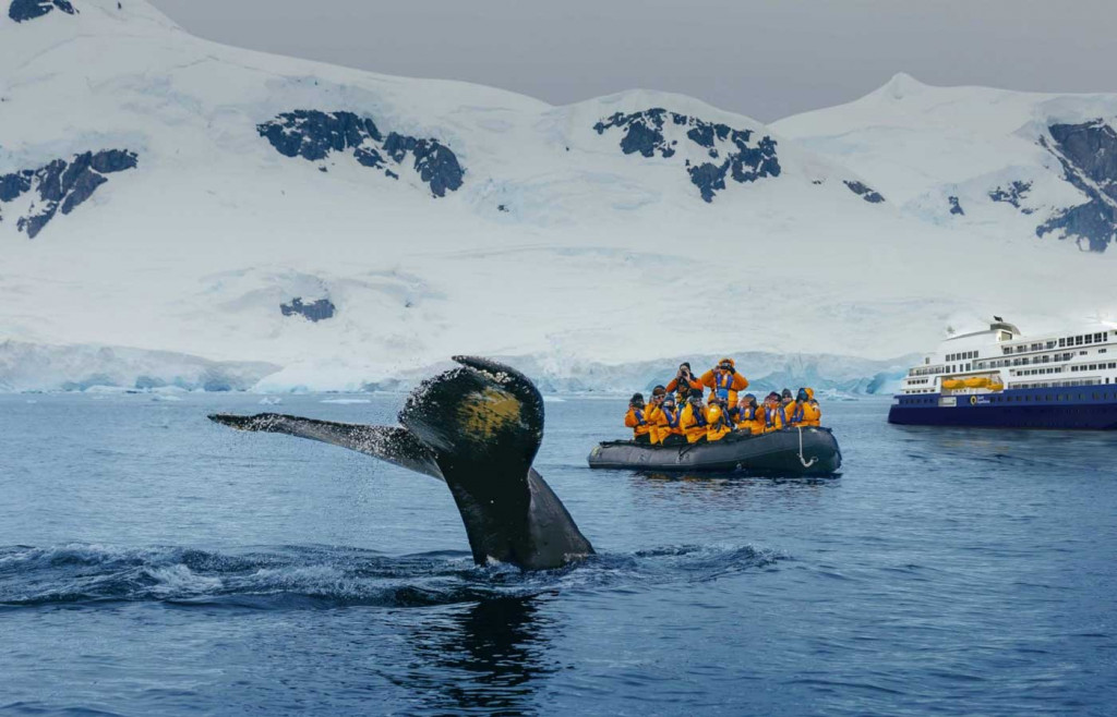 Quark-Ultramarine-Whale in Antarctica