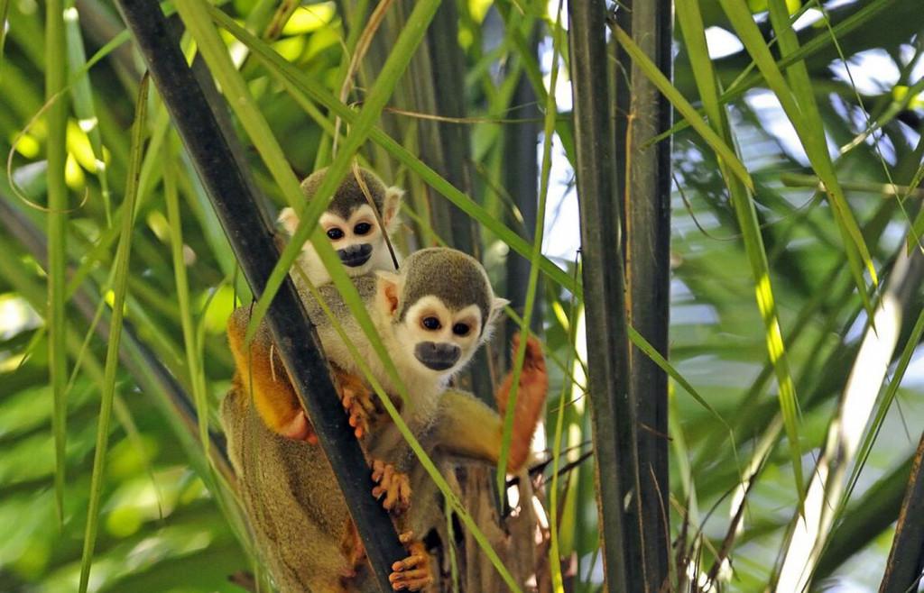 Wildlife in the AMazon, Ecuador