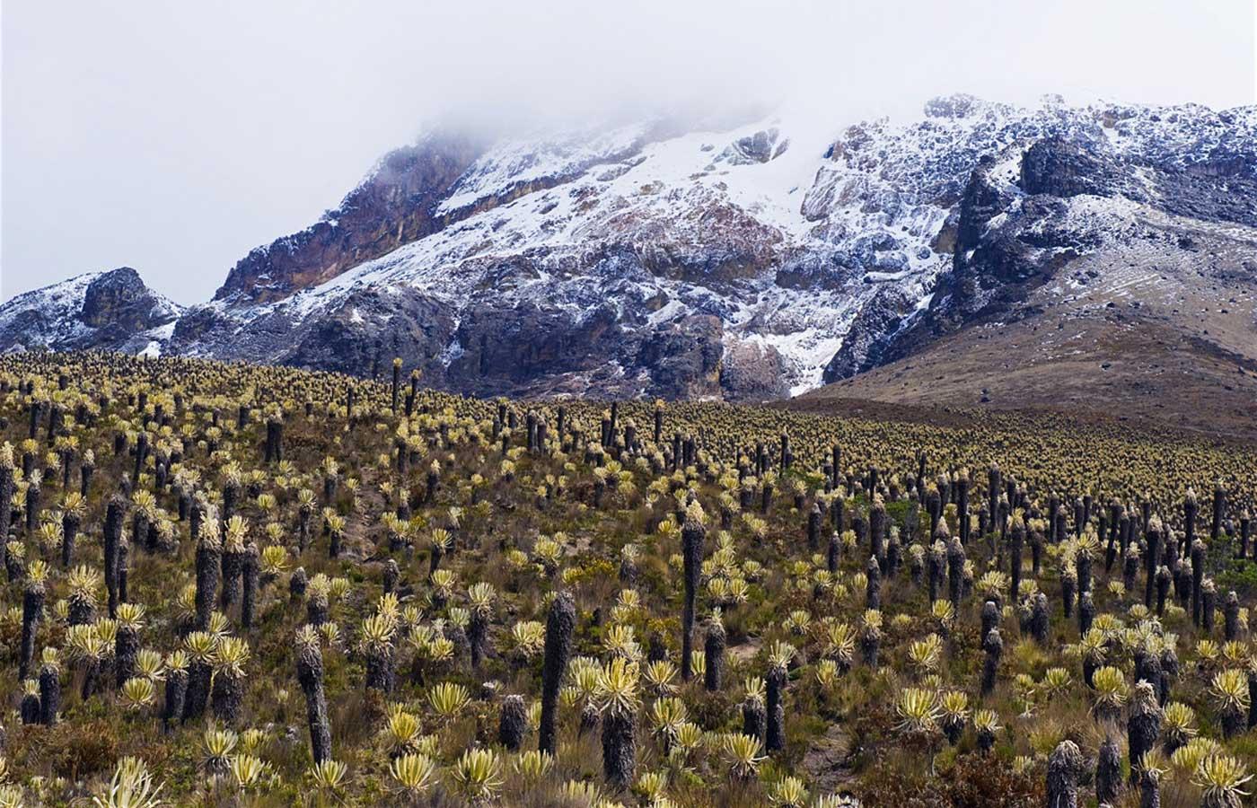 Los Nevados National Park, Colombia
