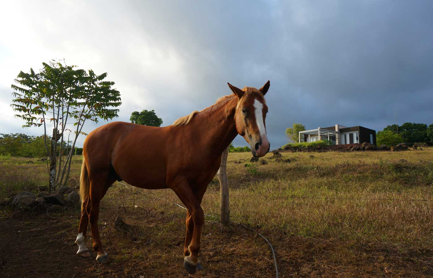 Horse riding is available at Montemar Eco-Luxury Villas