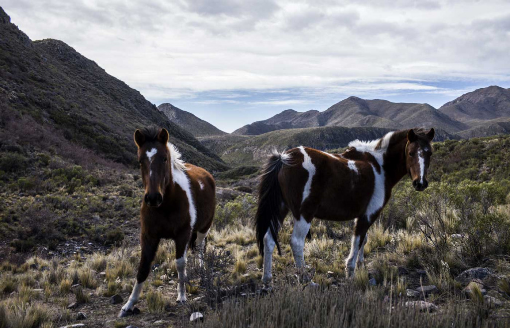 Horses at Casa de Uco, Argentina - wine region