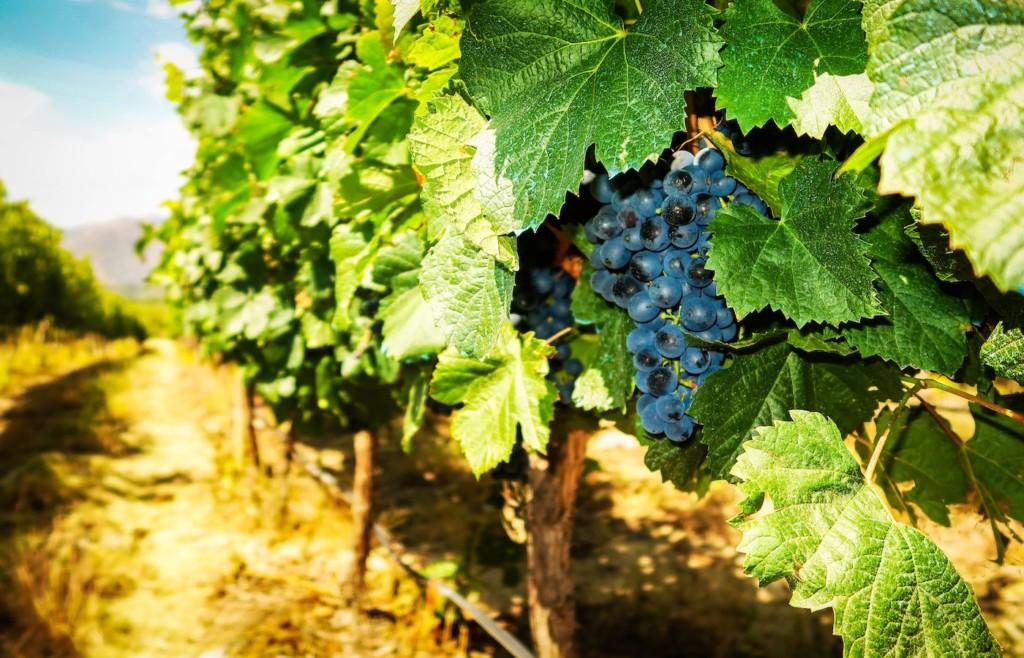 Mendoza, Argentine Wine Region