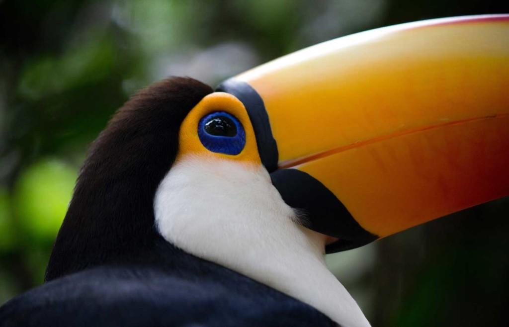 Parque das Aves - Brazilian side of Iguassu Falls