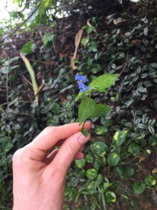 Foraging in Paraty, Brazil - family holidays to Brazil