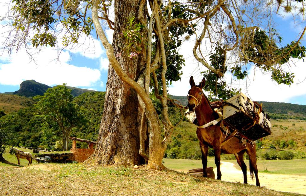 A donkey at the Comuna do Ibitipoca, Minas Gerais