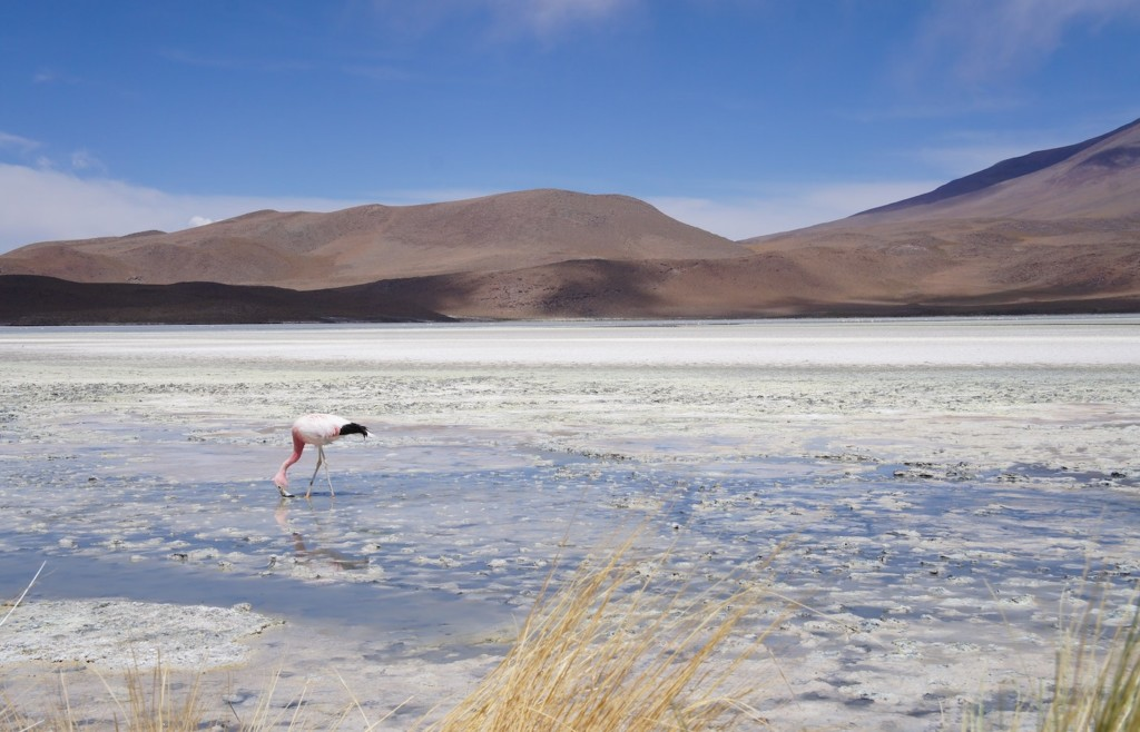 Andean Lagoons - luxury tours of the Salar de Uyuni
