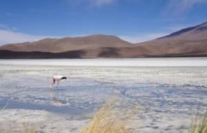 Andean Lagoons - luxury tours of the Salar de Uyuni