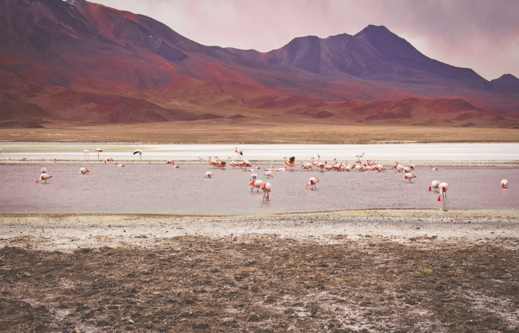 Lagoons in Bolivia - Flamingos