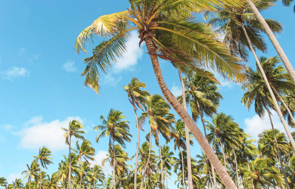 Palm trees - Luxury holidays in Porto de Galinhas