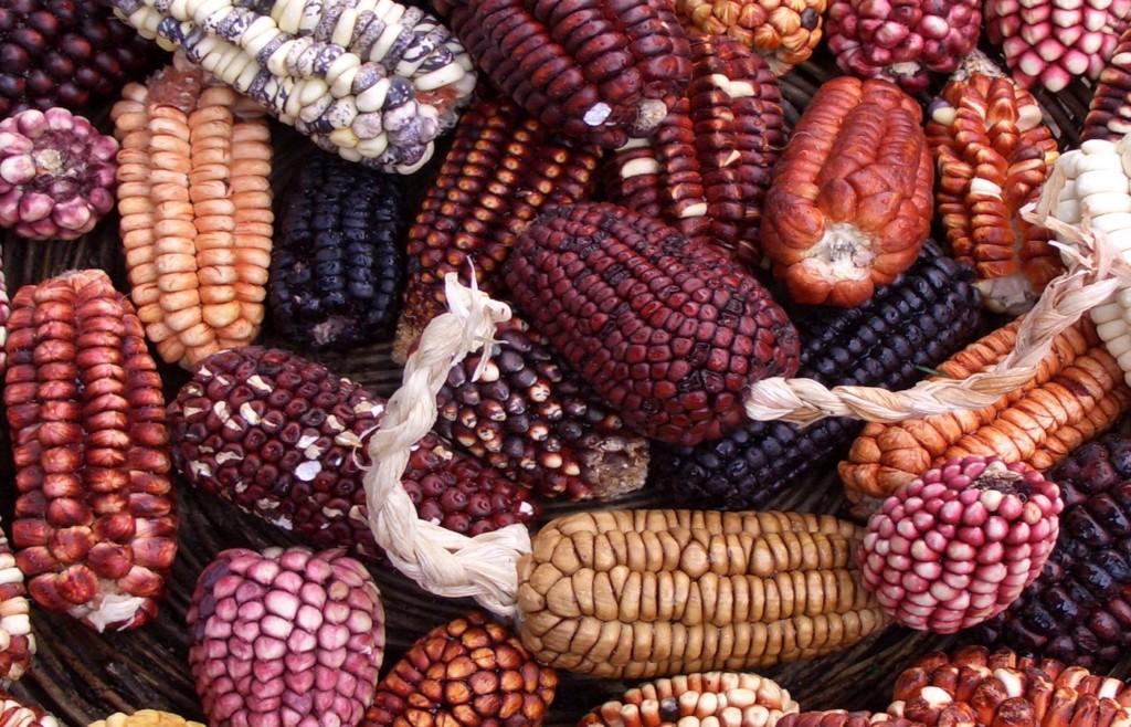 Peruvian Corn - Foodie tours