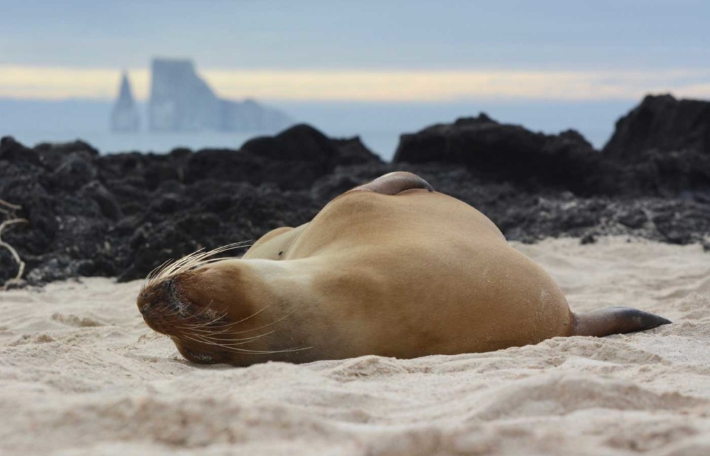 Sea lion - Galapagos Conservation Trust and Humboldt