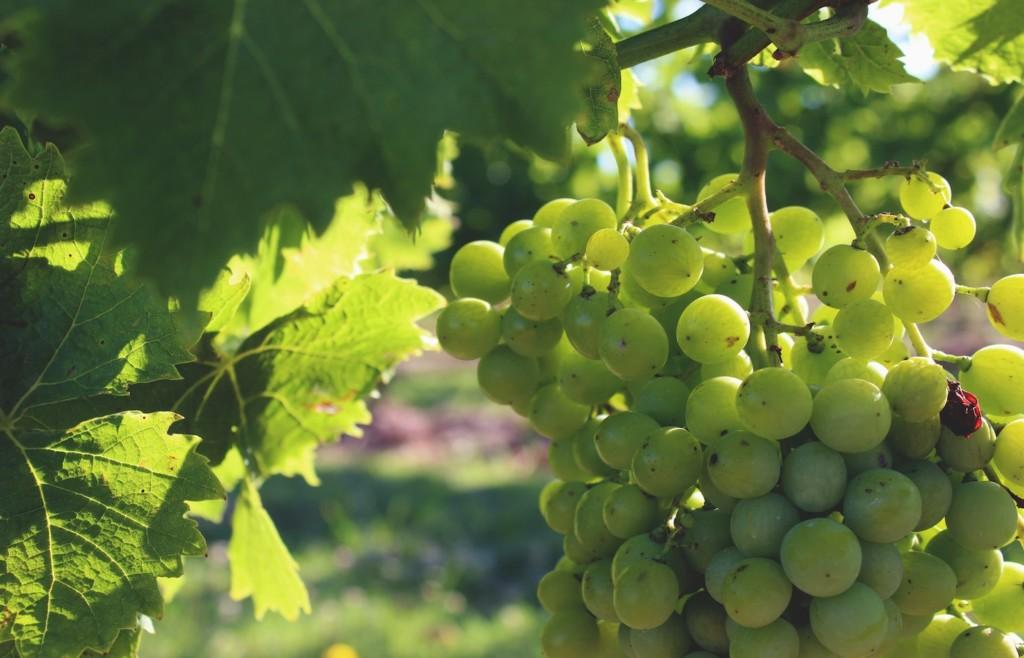 Uruguay winery