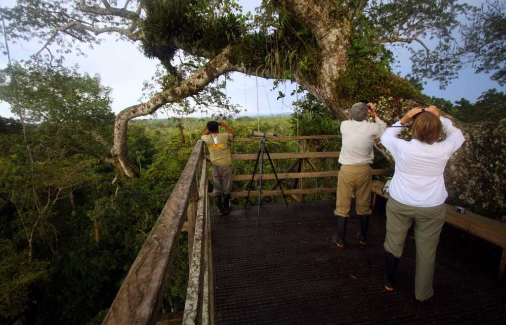 The observation tower at Sacha Lodge - Ecuadorian Amazon